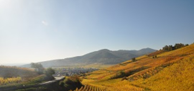 Alsace Gourmet & Wine Driving Tour - 5 Days - Honeymoon Breaks