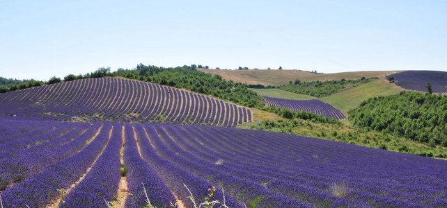 Honeymoon Roadtrip in Provence - 6 Days - Honeymoon Breaks