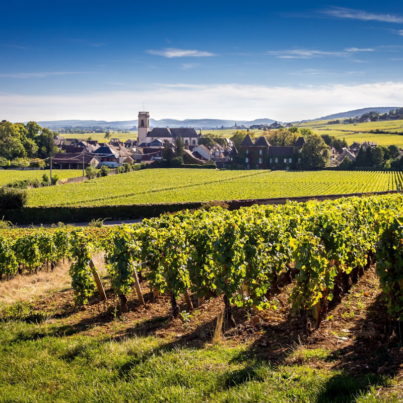 Burgundy Wine Driving Tour - 5 Days